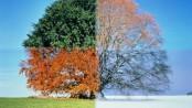 quattro_stagioni